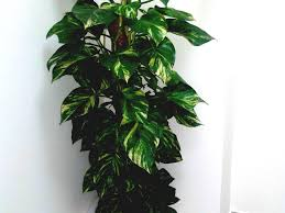 plants for office cubicle. Full Size Of Office Landscapingpany Dubai Indoor Plants U A E Outdoor Wall Designer Space Designs Chair Design For Cubicle