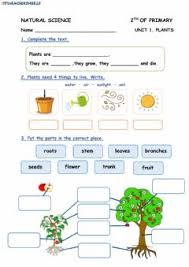 Download your free resource here! Plants Worksheets And Online Exercises
