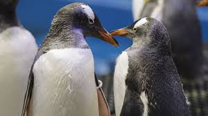 baby penguins.  Penguins Throughout Baby Penguins T