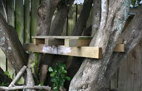basic tree house pictures. Treehouse Basic Tree House Pictures A