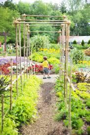 nature outdoor flower summer green produce backyard patio botany agriculture garden gardening arbor yard pergola garden