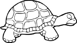 Small Picture Print Download Turtle Coloring Pages as the Educational Tool