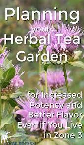 bee balm for herbal tea gardens