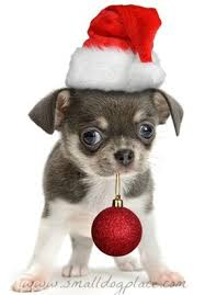 cute christmas puppies. Unique Cute Christmas Puppy Intended Cute Puppies