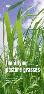 Identifying Pasture Grasses