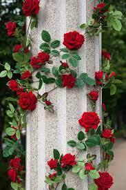 Rose Garden Desktop Wallpapers on ...