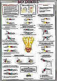 Back Exercises Gym Chart Back Exercises Floor Chartex Exercise Chart 16 X 23 Inch