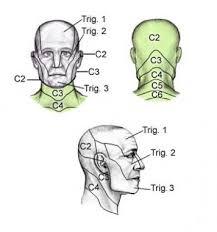 Dermatomes Anatomy Overview Gross Anatomy Natural Variants