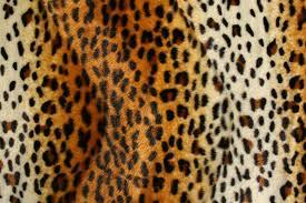Leopard Print Wallpaper Bedroom Leopard Bedroom Set Benches Bedroom Okdesigninterior Thrifty