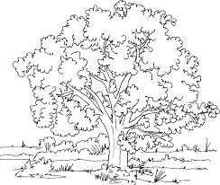 hurry coloring pages of trees with leaves tree 14469 unknown