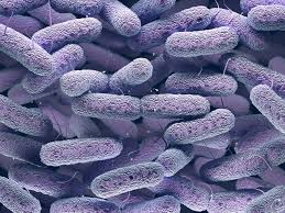 Resistant Enterobacteriaceae Infections Increased From <b>2013 to 2017</b>
