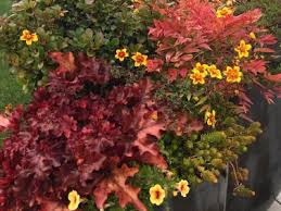 Small Picture Heuchera and Nandina Container Garden by Sublime Garden Design