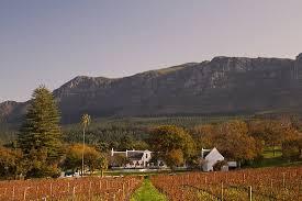 Excellents vins surtout en haut de gamme - Avis de voyageurs sur Klein  Constantia, Constantia - Tripadvisor