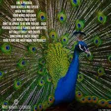 Peacock Beauty Quotes Best of Beauty Quotes About Peacocks QuotesGram Beautiful Animalstoo