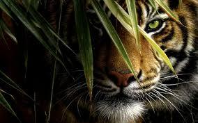 full hd images of animals. Plain Full Animals Animal Wallpaper Collection  Full HD On Hd Images Of Animals F