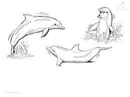 Kleurplaat Dolfijn Kleurplaat 6jpg
