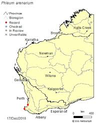 Phleum arenarium L.: FloraBase: Flora of Western Australia