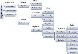 Chordata Taxonomy Chart Classes Of Chordata