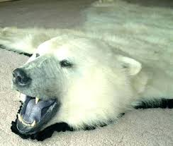 white bear rug polar bear rug polar bear rug with head polar bear writes the government white bear rug