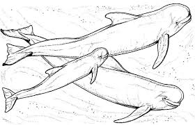 Small Picture Whale Sperm Whale Coloring Page Coloring for Kids Pinterest