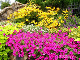 colorful small flower garden