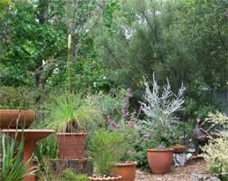 Small Picture Australian native plants in pots in a small suburban garden