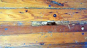 Image result for Termites love wood