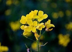 Image result for जीवन में बसंत के फूल