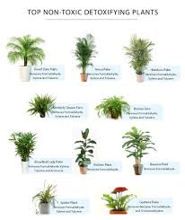 non toxic plants for cats 1454367283817 with poisonous plants in the home