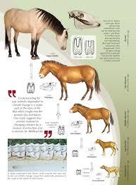 Many Many Charts Of Evolutionary Progression Of Various