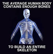 skeleton sitting in chair meme beautiful pictures funny skeleton