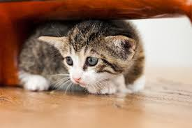 what are cats scared of 6 things cats are scared of and how to help them overcome those fears