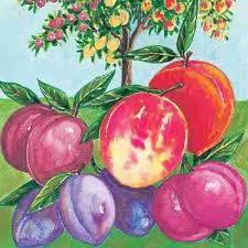 Bare Root MultiGraft Trees  Grow Bare Root MultiGraft Trees Fruit Salad Trees Usa
