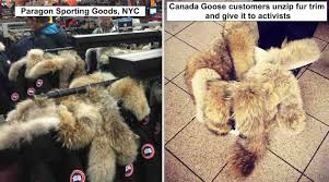 canada goose customers are unzipping donating the fur trim
