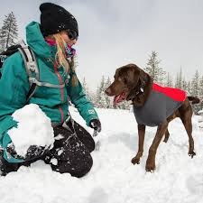 dog winter coat for cold weather