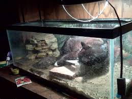 Turtle Tank Decor New Pet Fish Talk Show