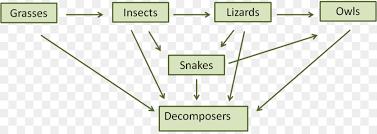 food web pyramid food chain food web decomposer ecosystem pyramid 5 step png