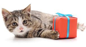 Show Your Love To Your Cat On The Upcoming World Pet Day