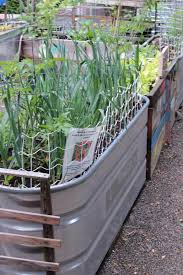 Kitchen Garden Trough Galvanized Water Trough Planters O Nifty Homestead