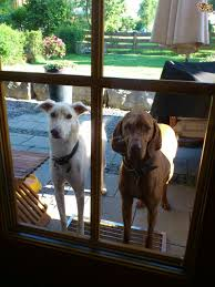 how to stop your dog from jumping at glass doors pets4homes