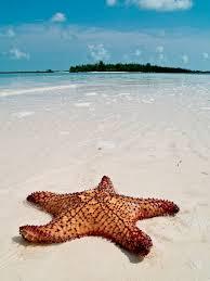 essay on starfish starfish jpg cb adrienne rich essays about life
