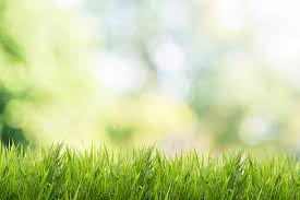 green grass field. Spring Or Summer With Grass Field And Nature Green Background Stock Photo