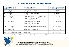 Cockatiel Chart Cockatiel Feeding Guide Goodbird Hand Feeding Formula