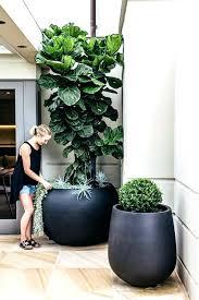 giant plant pots huge plant pots giant matte black planters dramatic look for entry or patio giant plant pots
