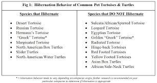 Hibernation Recommendations Arizona Exotics Tortoises