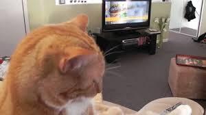 cat watching tv gif. cat watching tv gif