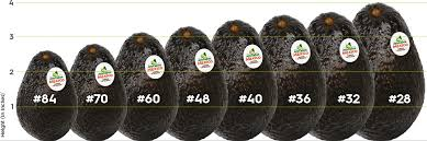 Back Of House Resources Foodservice Avocados From Mexico