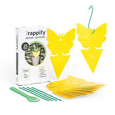 Trappify Sticky Fruit <b>Fly</b> and Gnat <b>Trap</b> Yellow Sticky <b>Bug Traps</b>