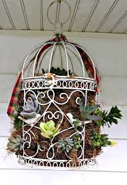 turn an old bird cage into a succulent planter