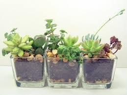 great office plants. Interesting Best Office Cubicle Plants Good Desk Kivik  Armchair Great Great Office Plants .